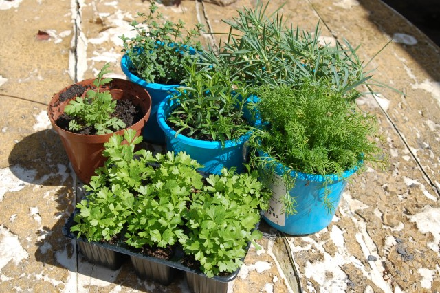 Herbs , getting back to basics and life……………….
